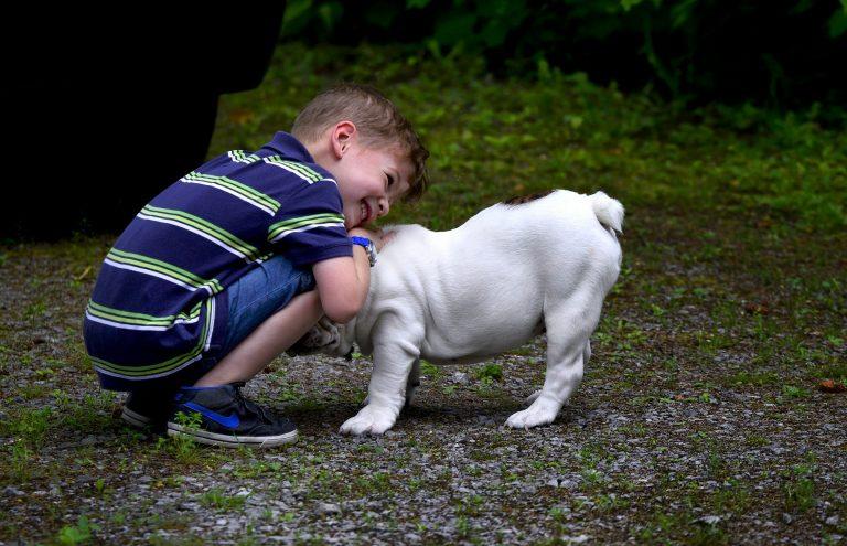Ребенок и домашние животные!